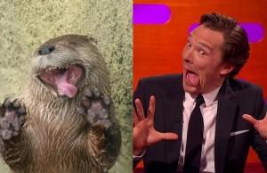 Benedict Cumberbatch imitando a una nutria