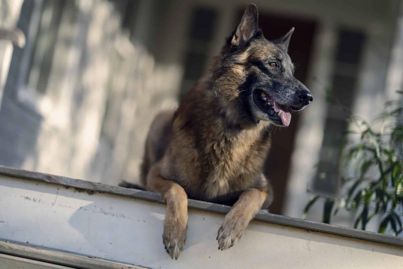 Dog / Perro en The Walking Dead 10x21 Diverged